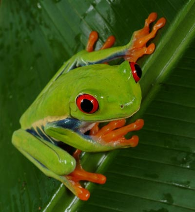 The MB Spirit Animal Guide Frog1